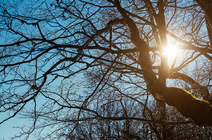 Фото №1 - Почему деревья зимой не погибают?