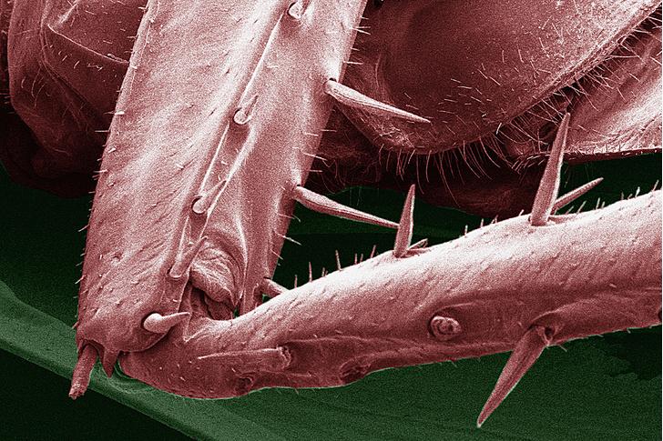 Фото №3 - Доктор зло: почему ни высокие технологии XXI века, ни опыт поколений не помогли истребить тараканов