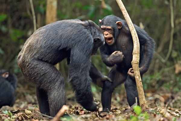 Фото №3 - 12 обезьян