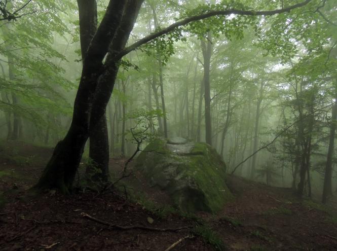 Фото №3 - Кто такие друиды и какое вы дерево