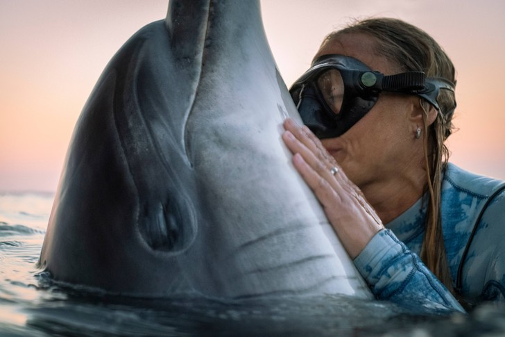 Фото №1 - В Новой Зеландии туристам запретили плавать с дельфинами