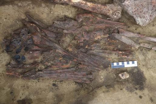 Фото №1 - Археологи нашли в Новосибирской области загадочный предмет из клювов птиц