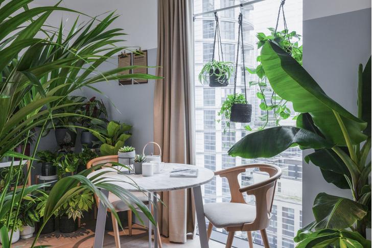 Фото №1 - Ученые проверили эффективность комнатных растений
