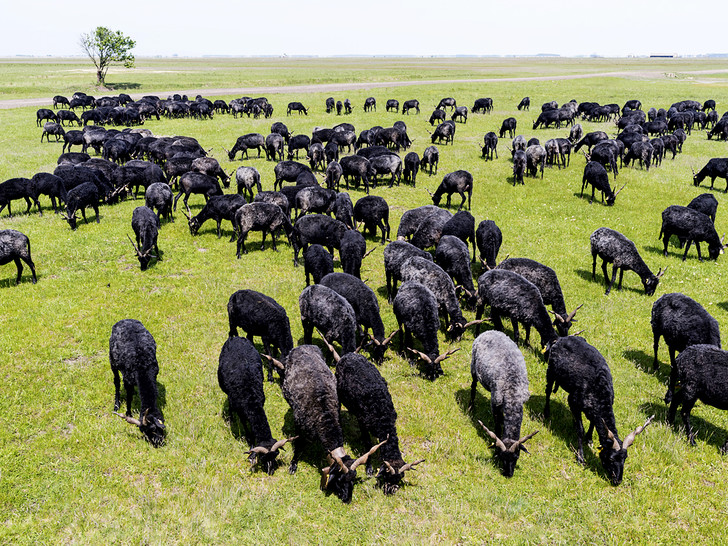 Фото №3 - Местные жители: пастушья воля