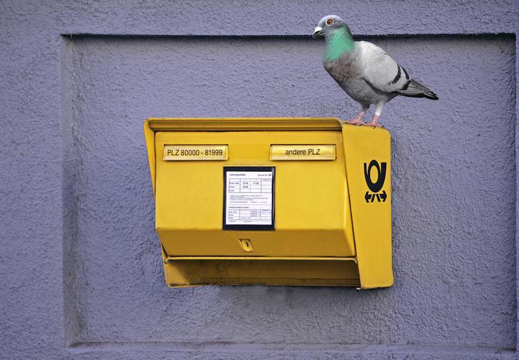Фото №6 - Птица-навигатор: 7 историй о голубиной почте