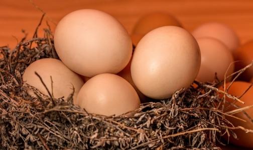 Фото №1 - Эксперты рассказали, чем перепелиные яйца «проигрывают» в пользе куриным