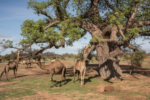 Фото №1 - Тест: Какое ты дерево? 🌳