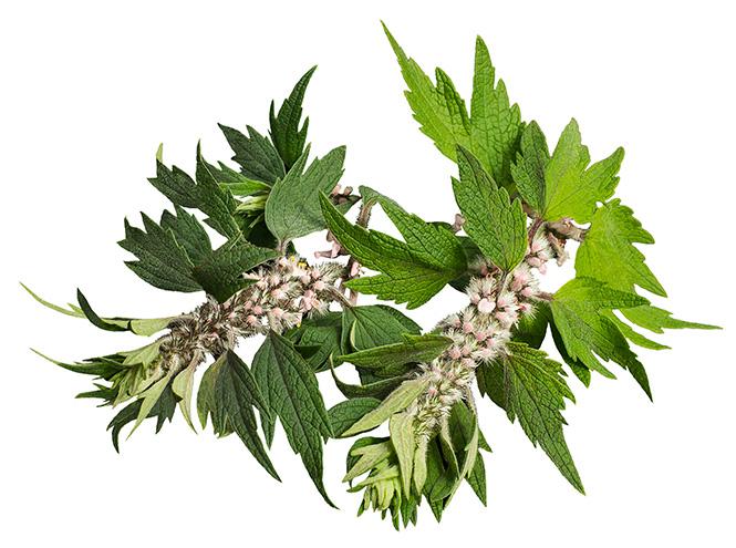 Фото №14 - Самые полезные лекарственные травы