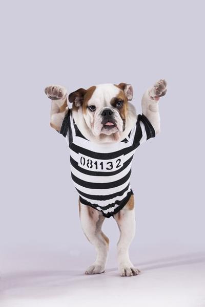 Фото №13 - Фотоподборка недели: собаки, которые уже готовы к Хэллоуину