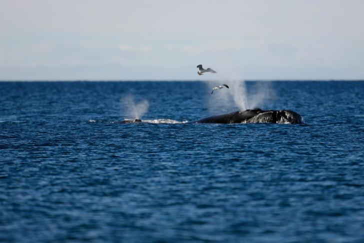 Фото №1 - Зачем киты научились шептаться