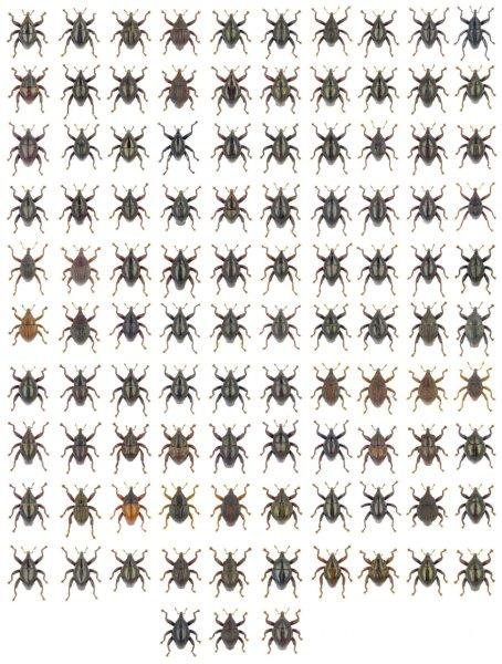 Фото №1 - Новые виды насекомых назвали в честь Астерикса, Йоды и Дарвина