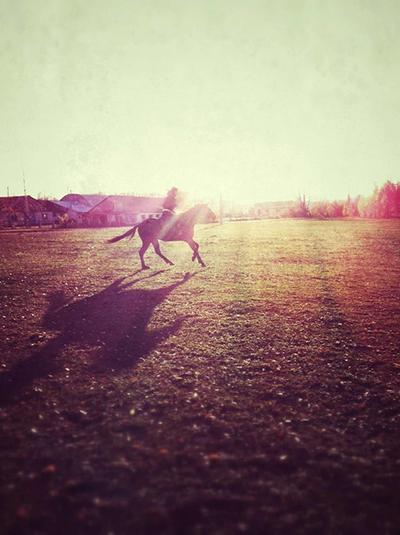 Фото №1 - Девушки на коне: самые романтичные наездницы Ульяновска