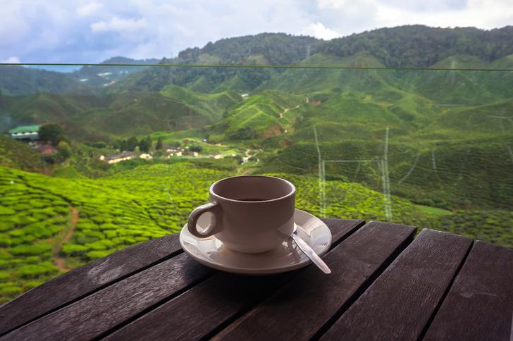 Фото №1 - Определены самые «чайные» и «кофейные» страны