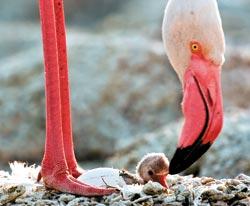 Фото №3 - Территория фламинго