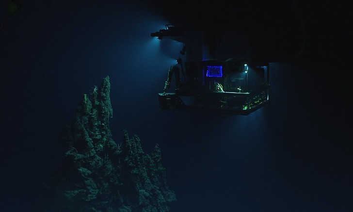 Фото №1 - Запущена онлайн-трансляция со дна Марианской впадины