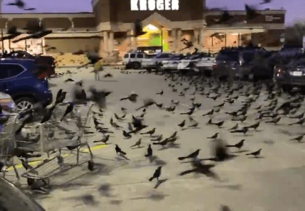 Фото №1 - «Они роились как мухи». В Техасе торговый центр атаковали тысячи птиц, как по Хичкоку (видео)