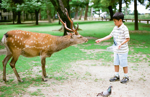 Фото №3 - Кобе, Япония. Начало большого путешествия