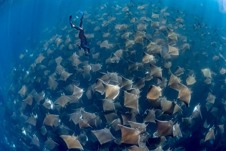 Фото №1 - Подводный мир
