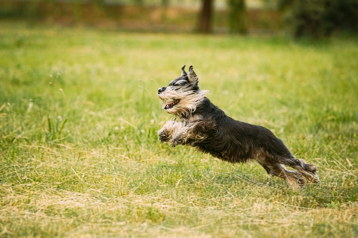 Фото №1 - Ученые назвали самые агрессивные породы собак