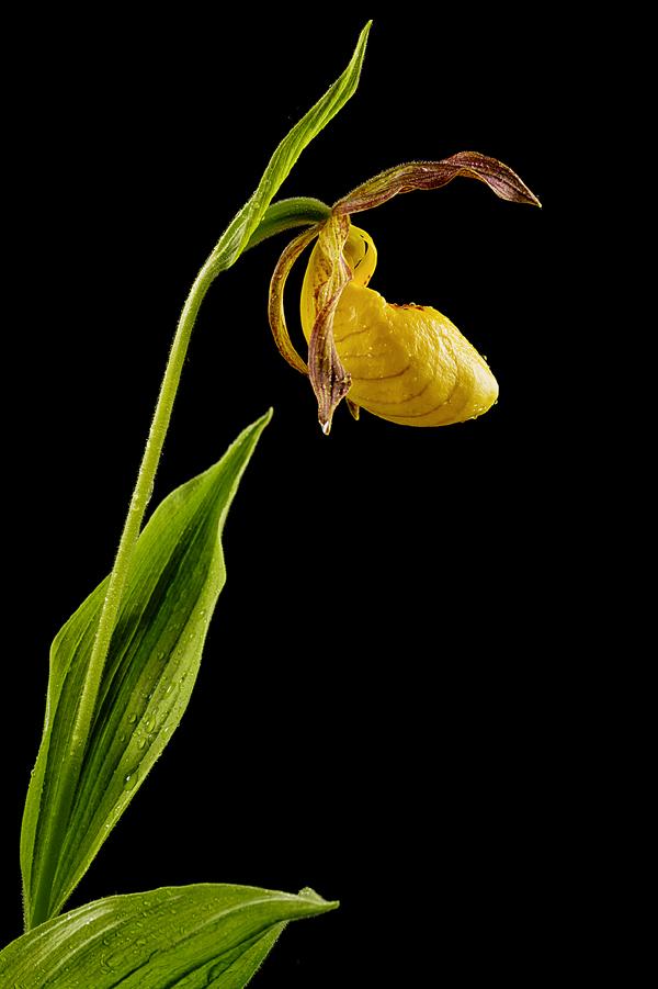 Фото №6 - Ботаника: прекрасные мошенницы