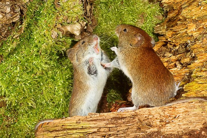 Фото №2 - Боевики для мышей, чтение мыслей через вену и другие новые открытия