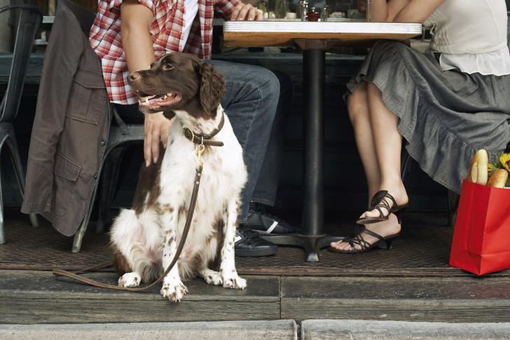 Фото №1 - Собак будут пускать в рестораны Нью-Йорка