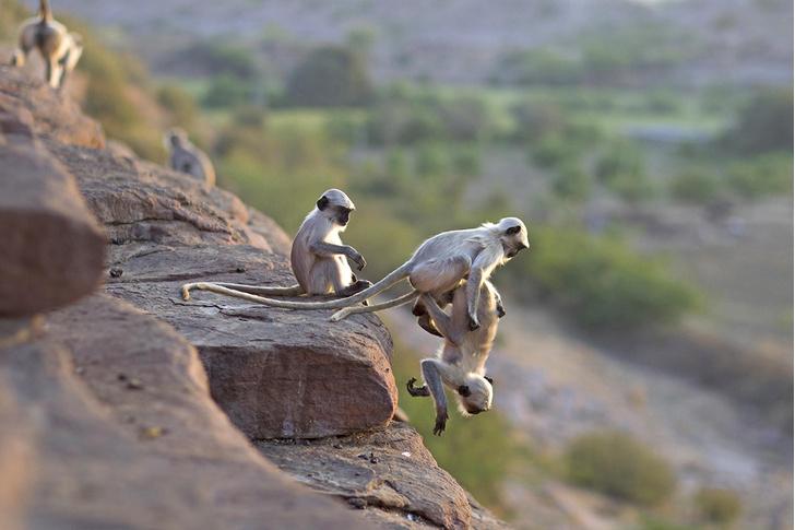 Фото №1 - Один кадр. Индия