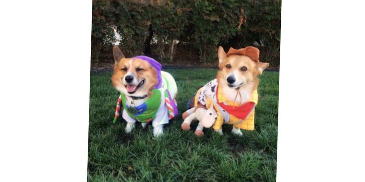 Фото №12 - 20 очаровательных собак в костюмчиках по мотивам мультфильмов Disney