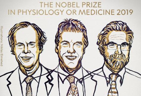 Фото №1 - Названы лауреаты Нобелевской премии по медицине