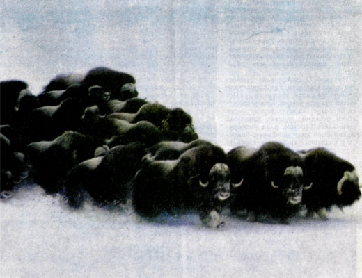 Фото №1 - Почему молчат умингмаки