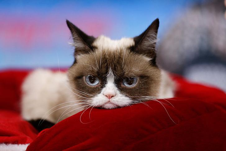 Фото №1 - Умер Сердитый котик