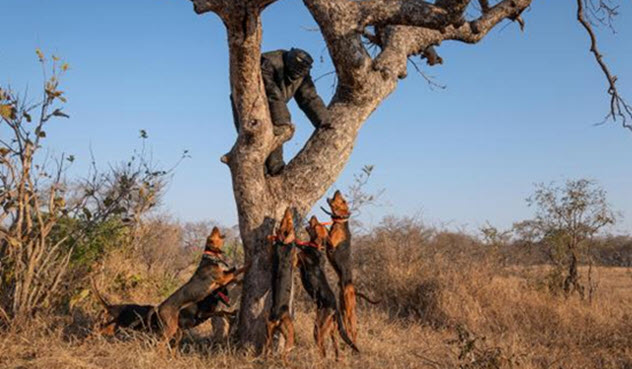 Фото №5 - 5 безумных идей для защиты природы, которые сработали