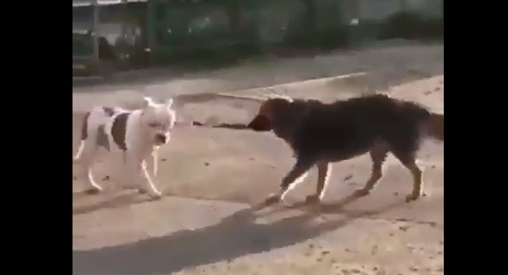 Фото №1 - Бездомный пёс отвязал поводок привязанного к забору сородича и попытался увести его с собой (видео)