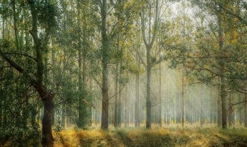 Фото №1 - В Ленобласти зарегистрировали первый за сезон случай клещевого энцефалита