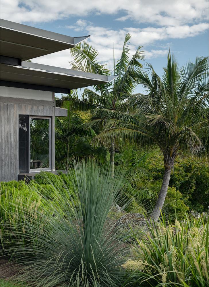 Фото №2 - Тропический сад в Австралии