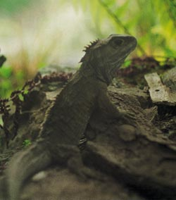 Фото №2 - Ровесница динозавров