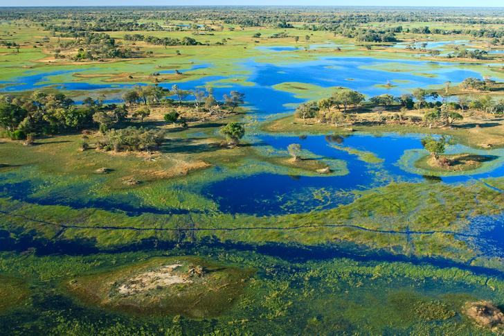 Фото №1 - Притягательная трясина: 12 самых живописных болот мира