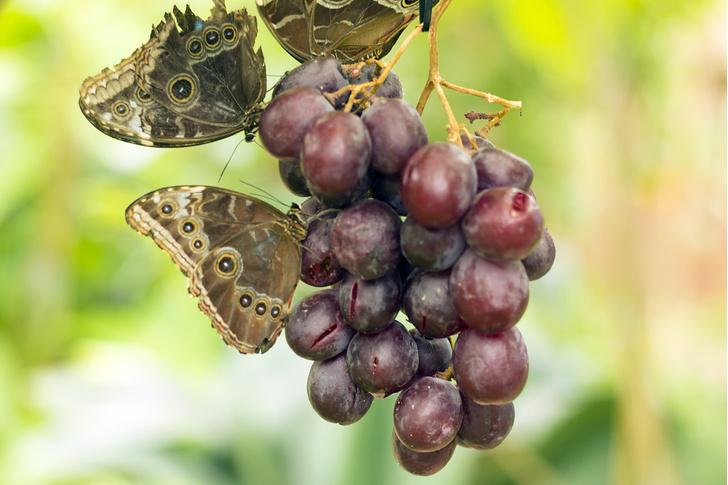 Фото №2 - Как напиваются насекомые, птицы и животные