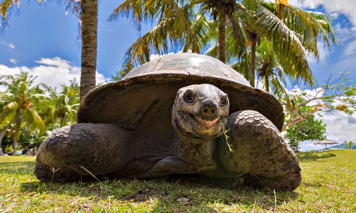 Фото №7 - 11 самых старых существ на Земле