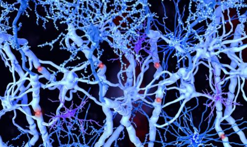 Фото №1 - Ученые СПбГУ: Нервные клетки восстанавливаются даже после серьезных травм позвоночника