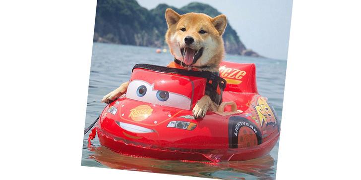 Фото №2 - 20 очаровательных собак в костюмчиках по мотивам мультфильмов Disney