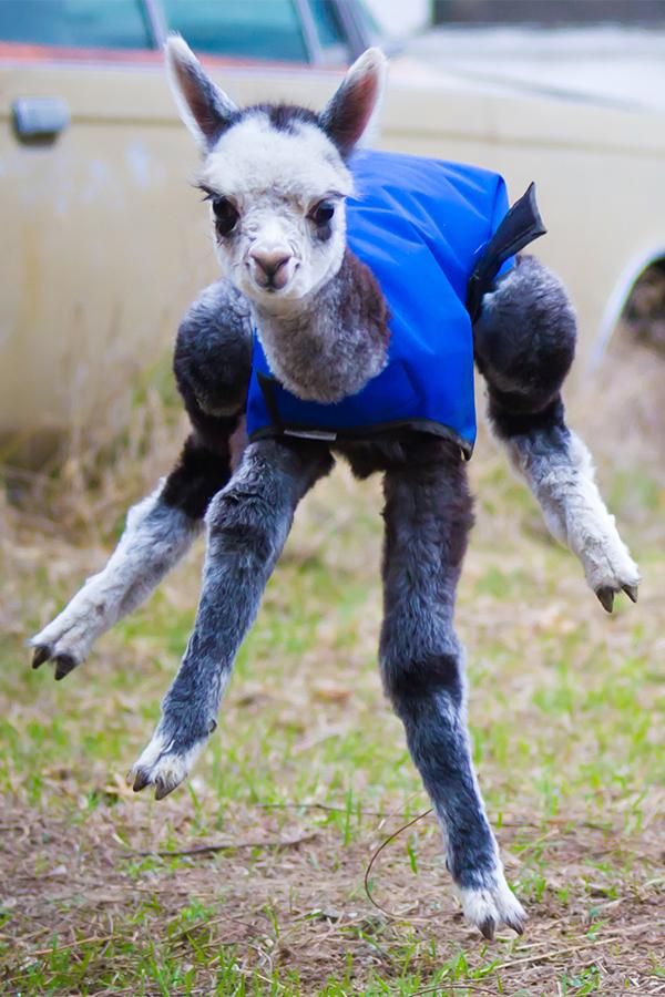 Фото №2 - Только посмотрите на них! 10 самых уродливых животных на Земле