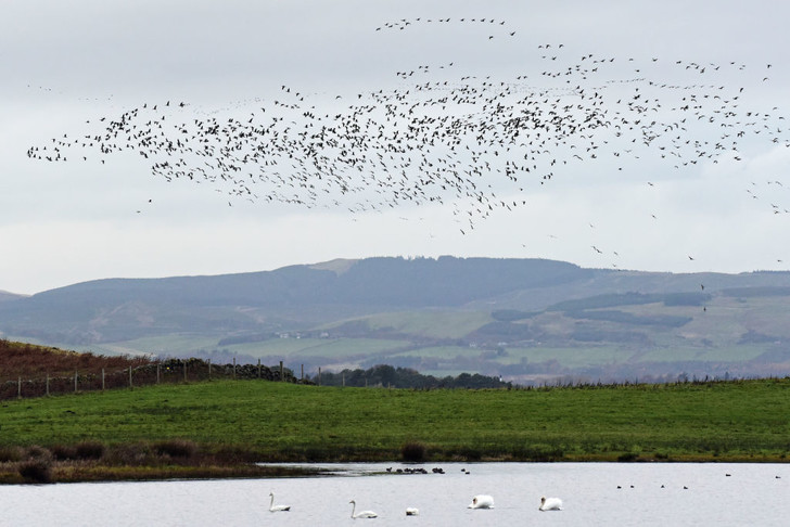 Фото №1 - Птицы покидают Исландию