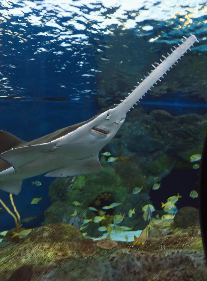 Фото №1 - Биологи зафиксировали явление «непорочного зачатия» среди рыб
