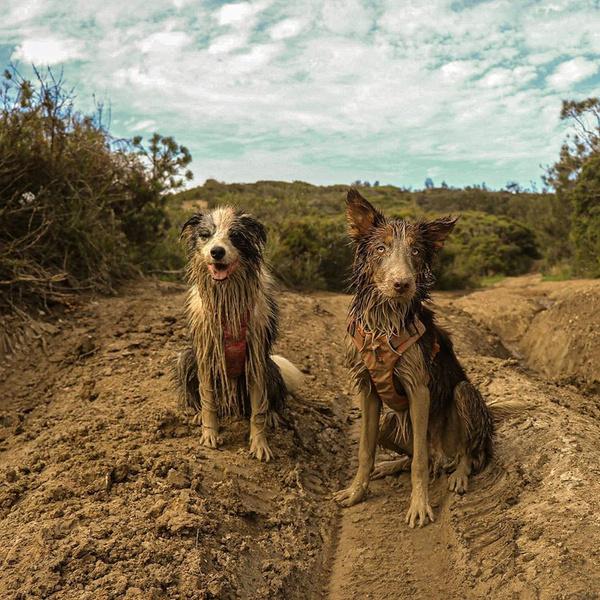 Фото №19 - Если собака без поводка: 15 фото песиков до и после прогулки