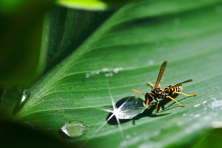 что делать если укусила оса или пчела