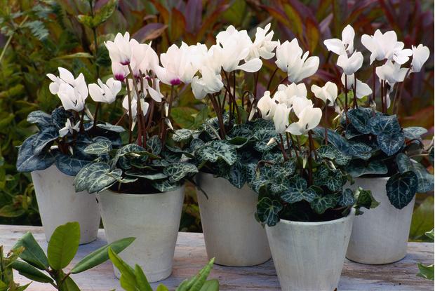 Фото №8 - 10 растений, которые выгоняют из дома плохую энергию