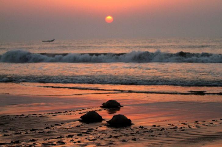 Фото №1 - Почему морская вода может быть опасна для здоровья