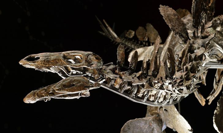Фото №1 - В Африке обнаружили останки древнейшего в мире стегозавра