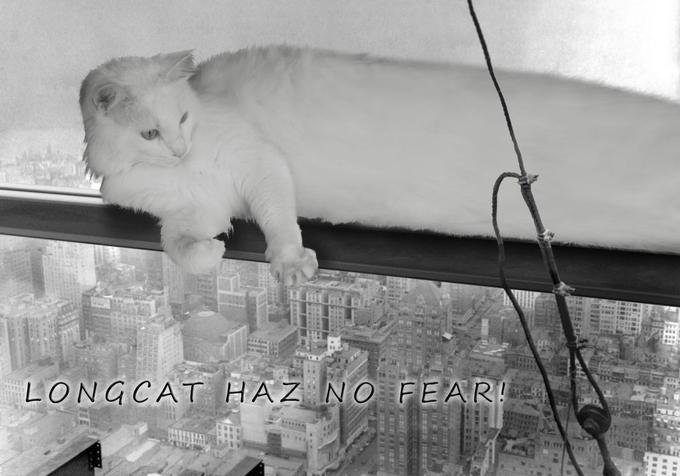 Фото №4 - Умер самый длинный мемокот Интернета Longcat. Каким мы его запомнили в мемах, гифках и видео
